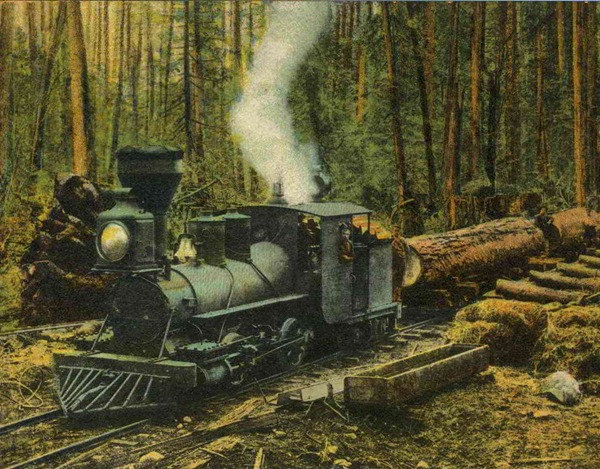 old curly -  royal city logging camp -  robert harvie and percy des brisay